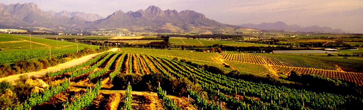 southafrica_1171x355_wine04