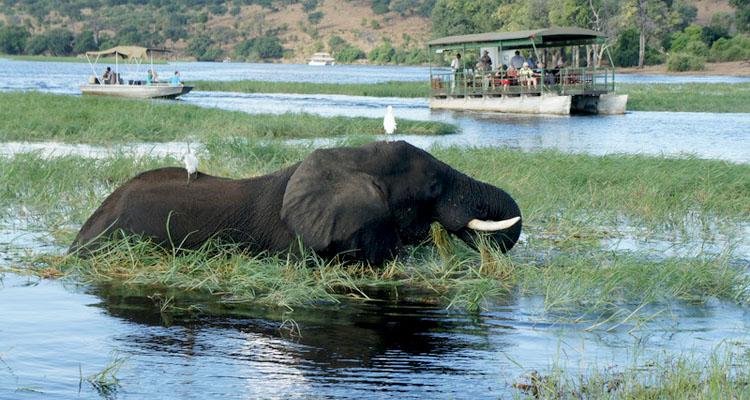 safrica_botswana750x400_chobe_dsc05275