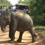 srilanka_750х400_02