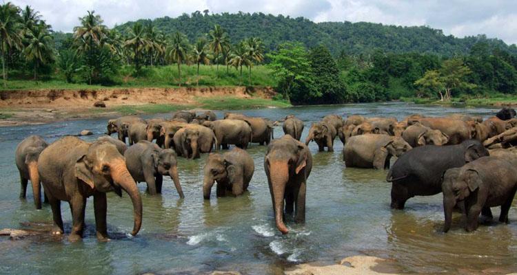 srilanka_750х400_12