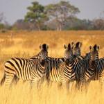 botswana_750x400_okavango_07