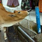 india_750х400_rishikesh-8