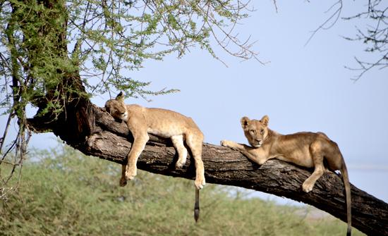 tanzania-2012--blog12