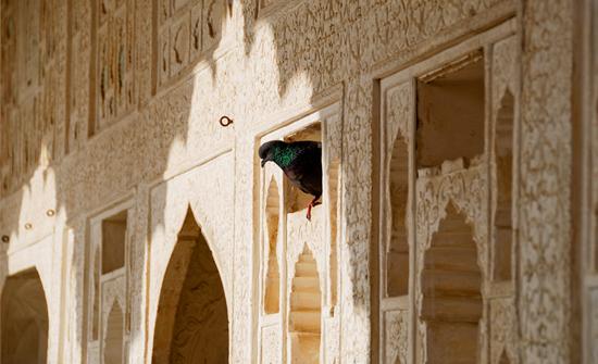 india2010-blog117