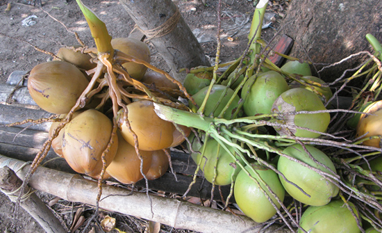 india2010-blog184