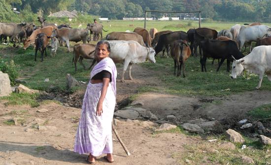 india2010-blog231