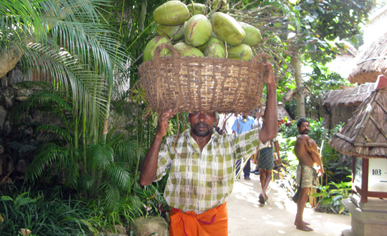india2010-blog243