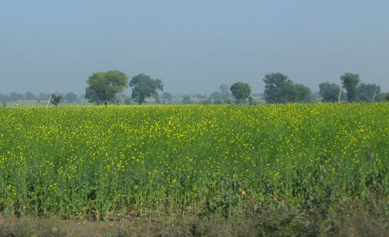 india2010-blog42