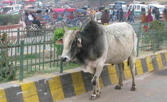 india2010-blog98
