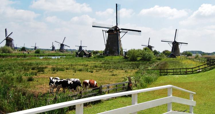 holland_750_2018_5
